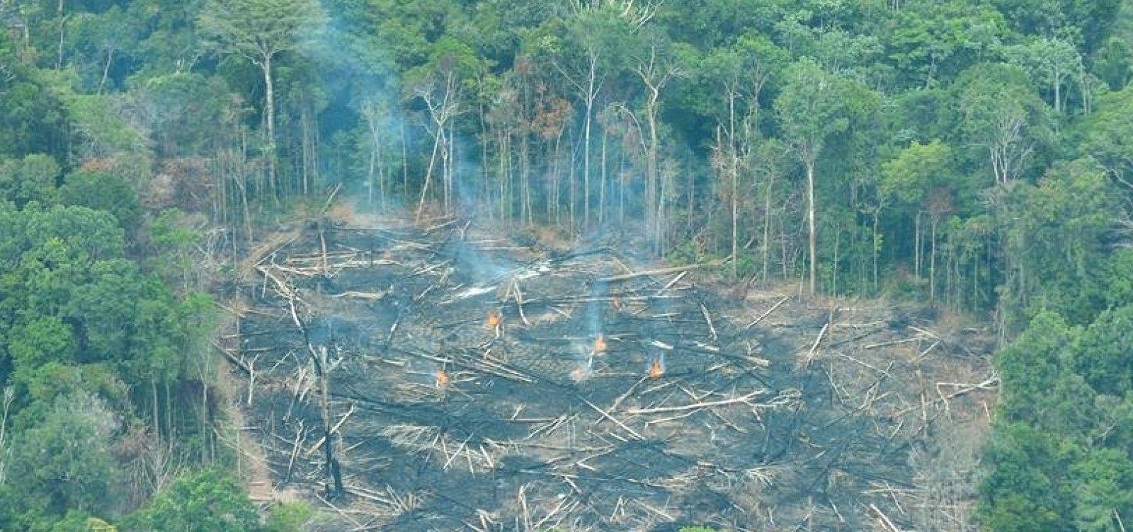 Desmatamento na Amazônia cresceu 14% em dezembro, aponta Inpe