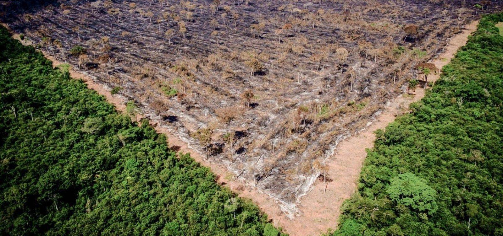 Bolsonaro sobre Amazônia: 'Nem se você pegar o fósforo, o álcool, é difícil pegar fogo'