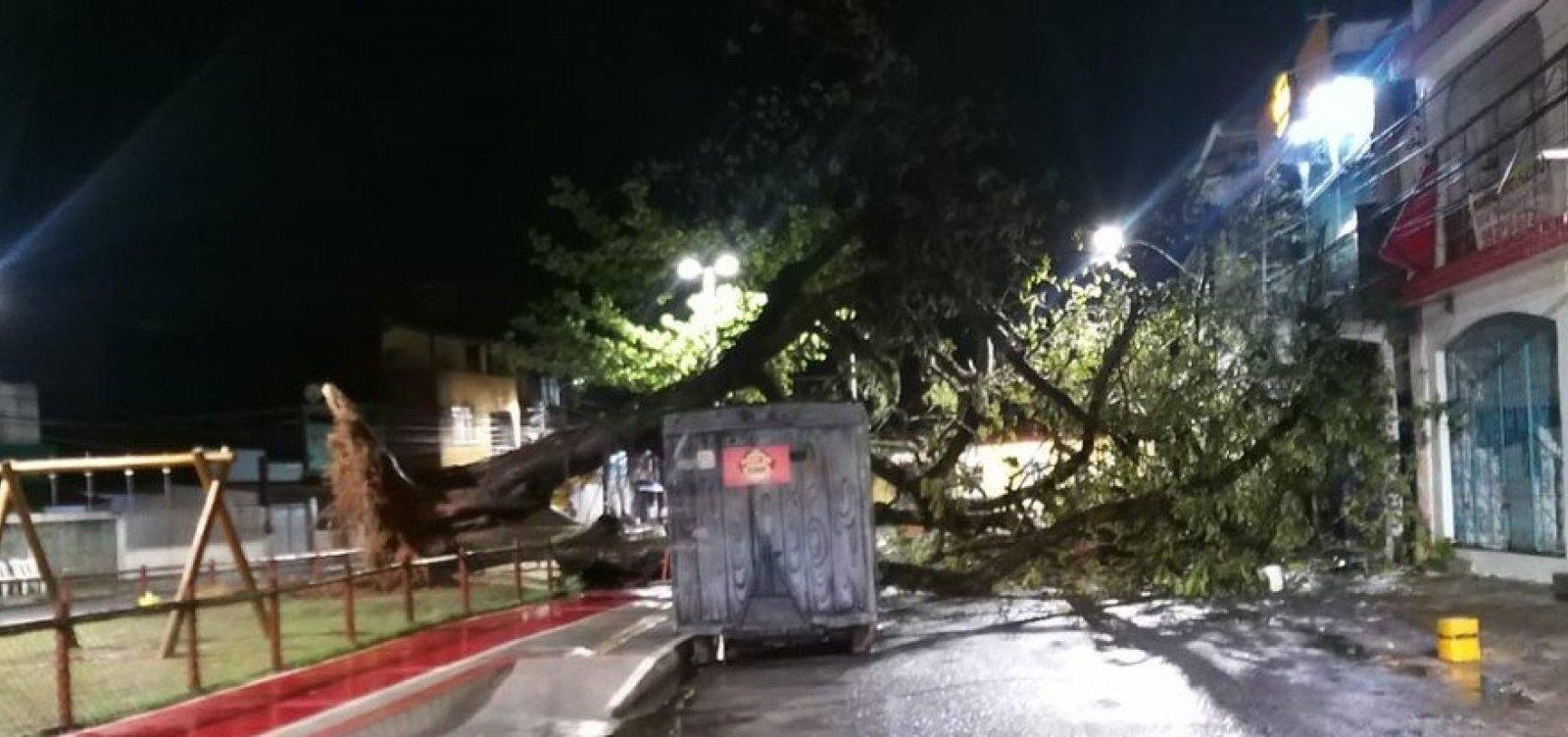Com fortes chuvas em Salvador, árvore cai em praça de Periperi