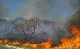 Pesquisa mostra crescimento de 27,5% no número de queimadas no país