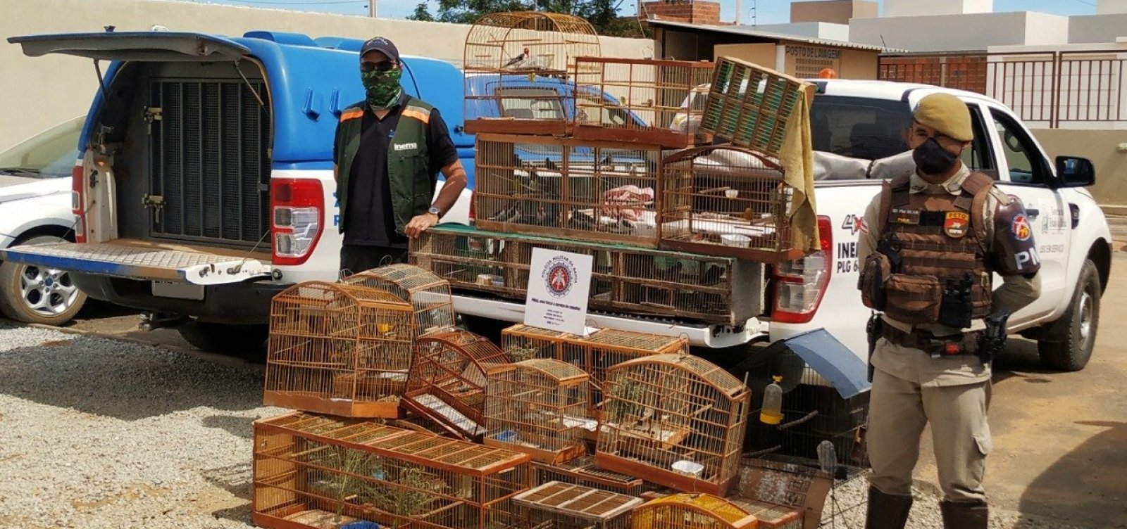 Aves silvestres são apreendidas durante operação no interior da Bahia