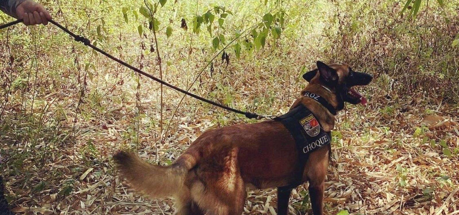 Cão farejador ajuda policiais a localizar envolvido na morte de PM em Arembepe