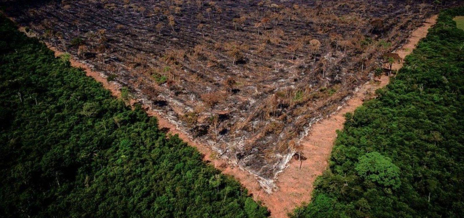Desmatamento na Amazônia em maio é o maior nos últimos cinco anos