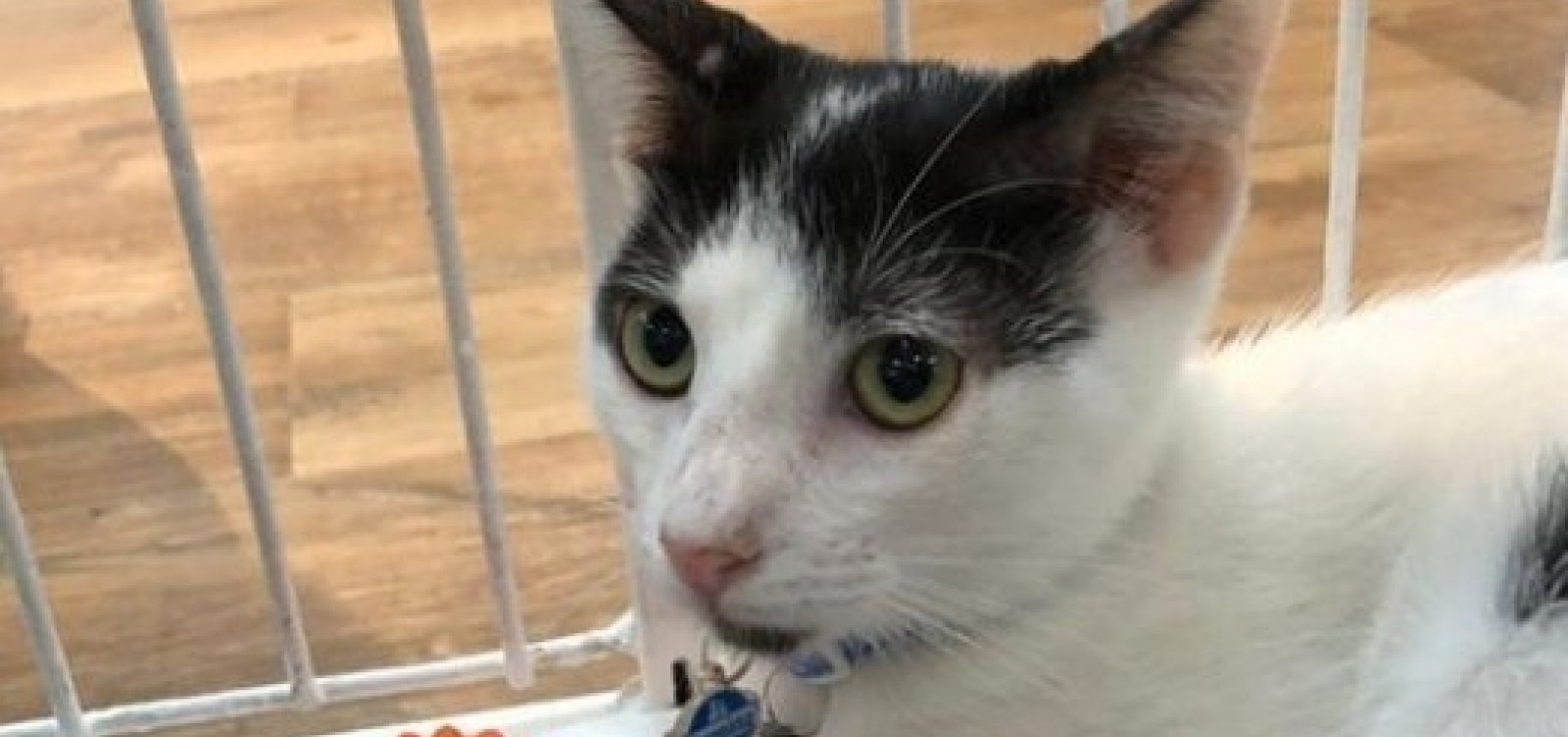 Cuidadores fazem terceira feira para ajudar gatinhos desabrigados da colônia de Piatã
