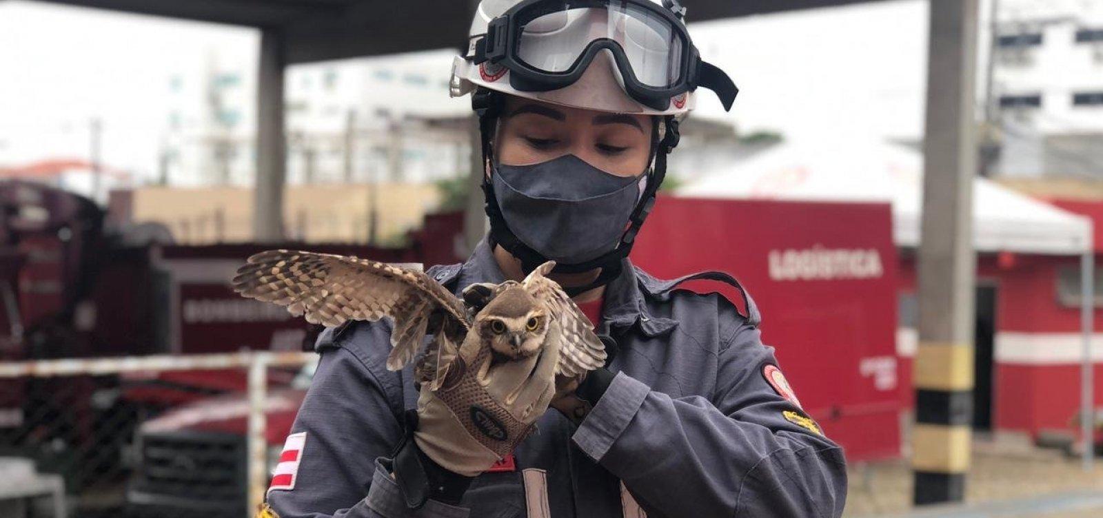 Bombeiros resgatam Coruja em residência em Jequié