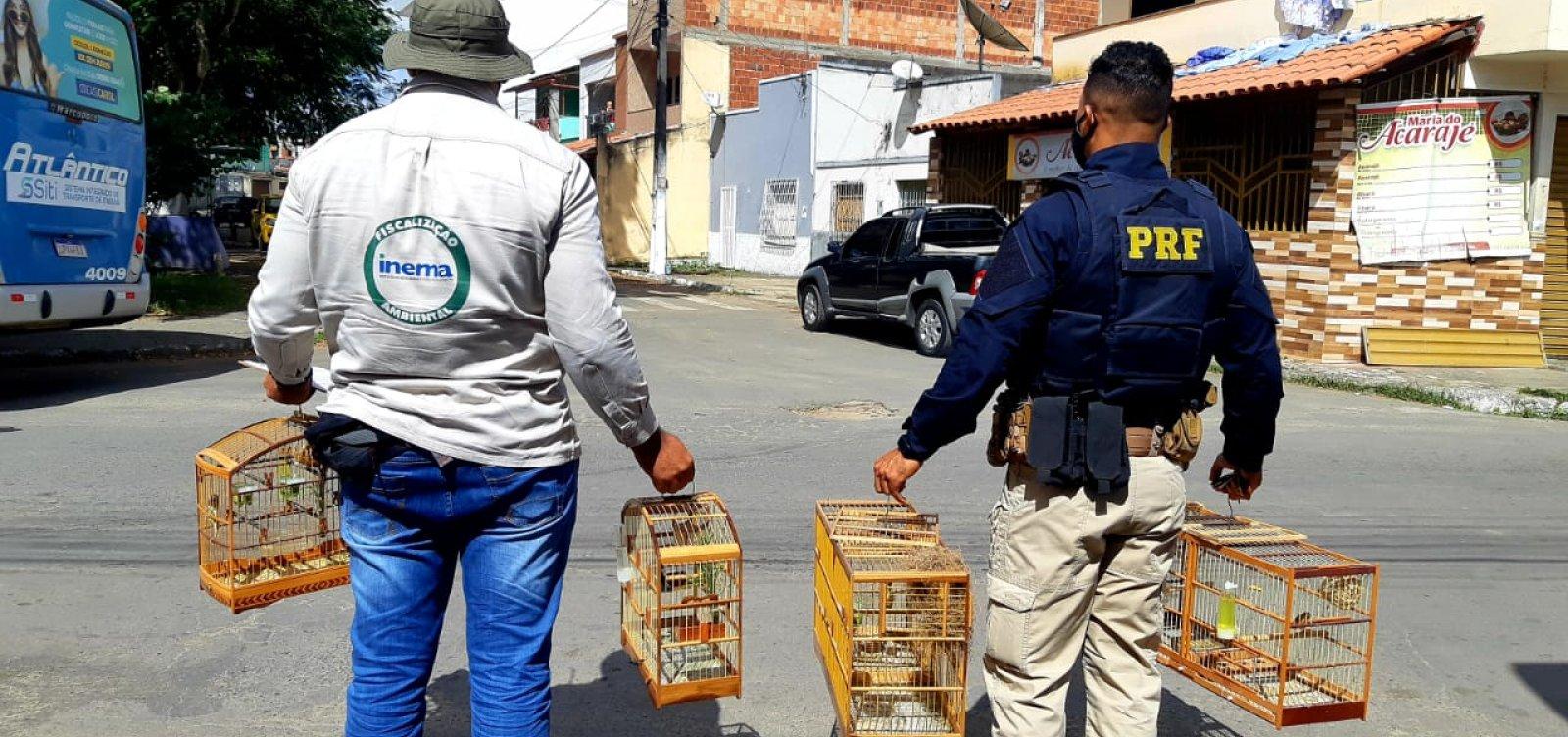 Inema apreende 288 pássaros de criação ilegal em operação no sul da Bahia