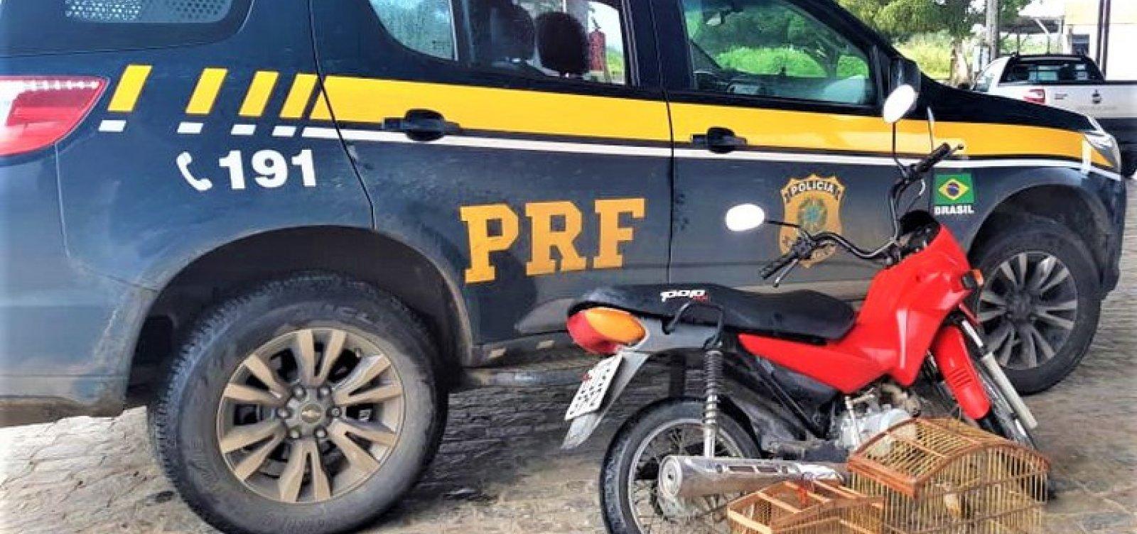 PRF prende homem que traficava pássaros silvestres