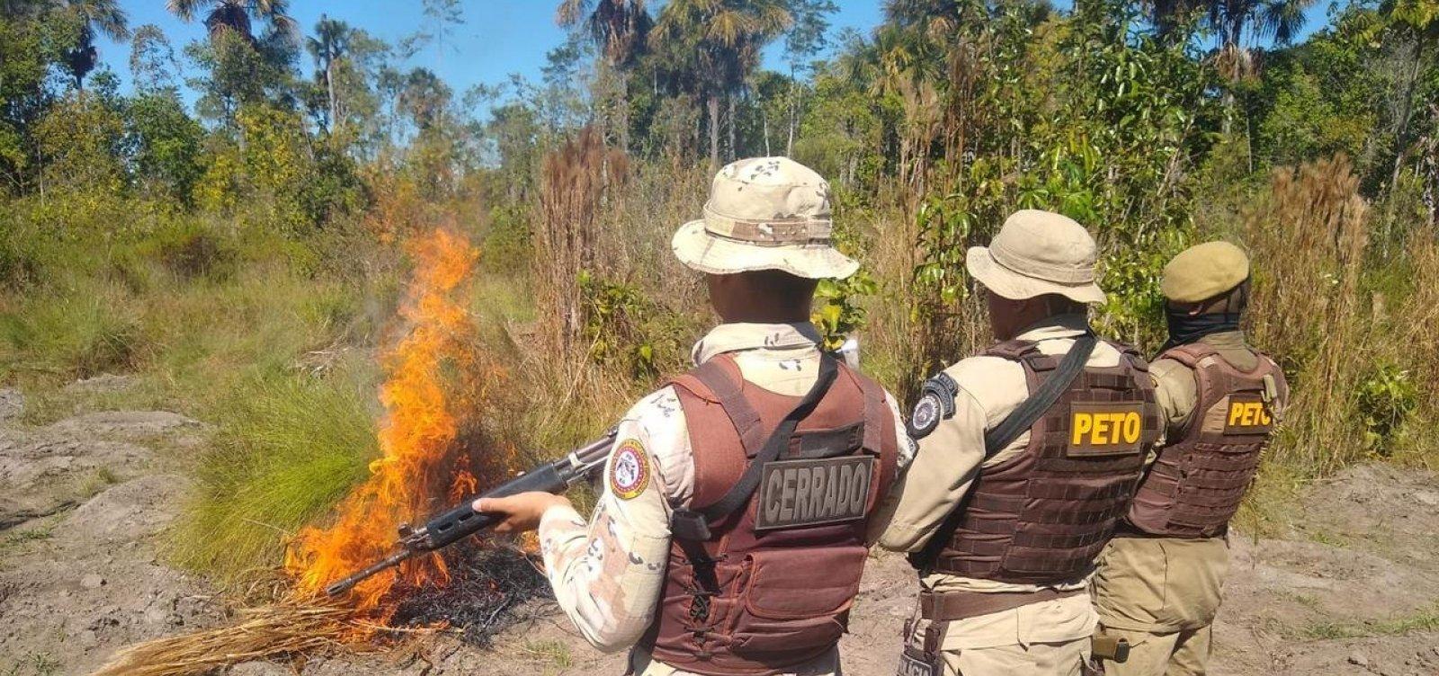 PM toca fogo em cinco mil pés de maconha no oeste do estado