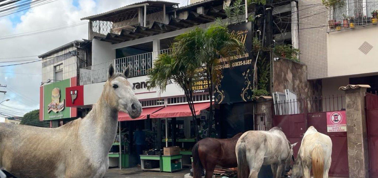 Mesmo após denúncias, cavalos continuam soltos no bairro de Pernambués
