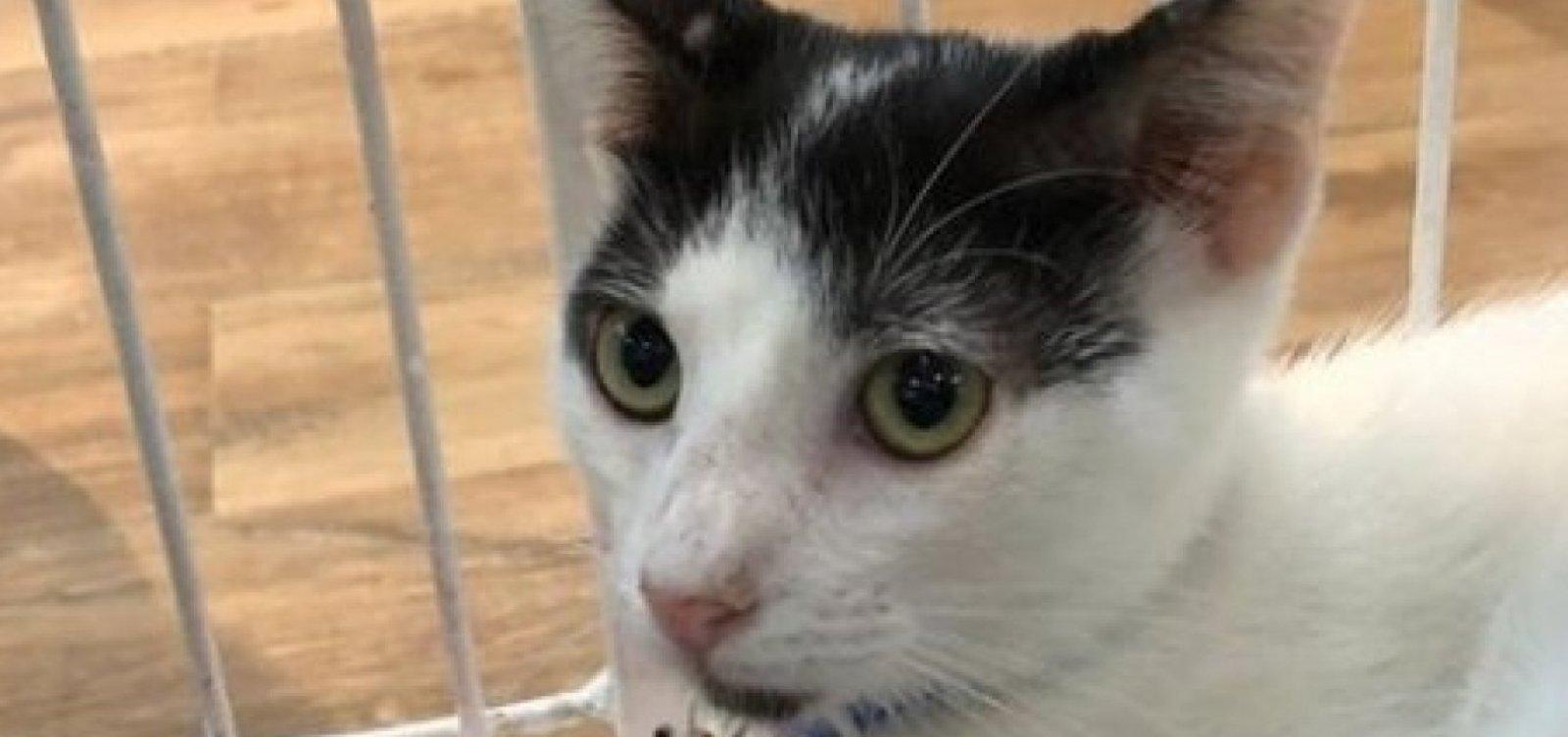 ONG faz nova feira de adoção com gatos sobreviventes de incêndio em colônia de Piatã