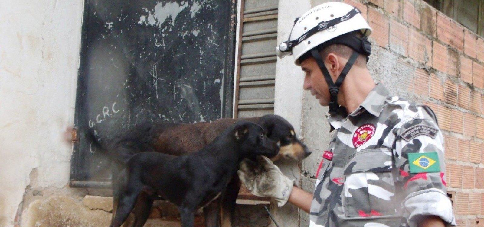 Brigada voluntária de resgate de animais pede ajuda na internet para voltar a atuar