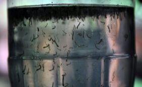 Governo libera mais R$ 500 mi para combate ao Aedes e a microcefalia