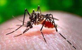 Mortes registradas na Bahia por chikungunya ocorreram em Jaguarari e Itiúba