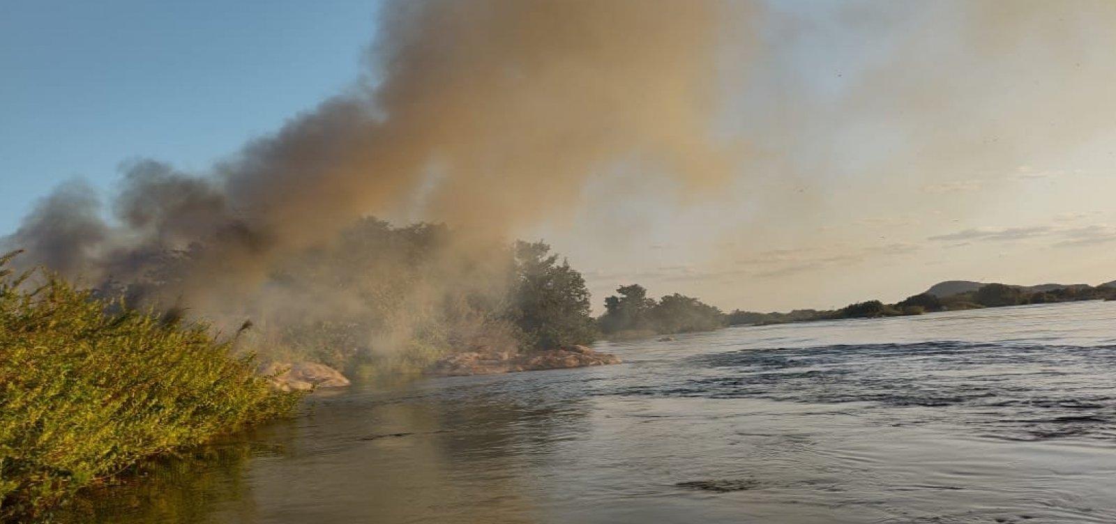 PM destrói 39 mil pés de maconha em cidade baiana