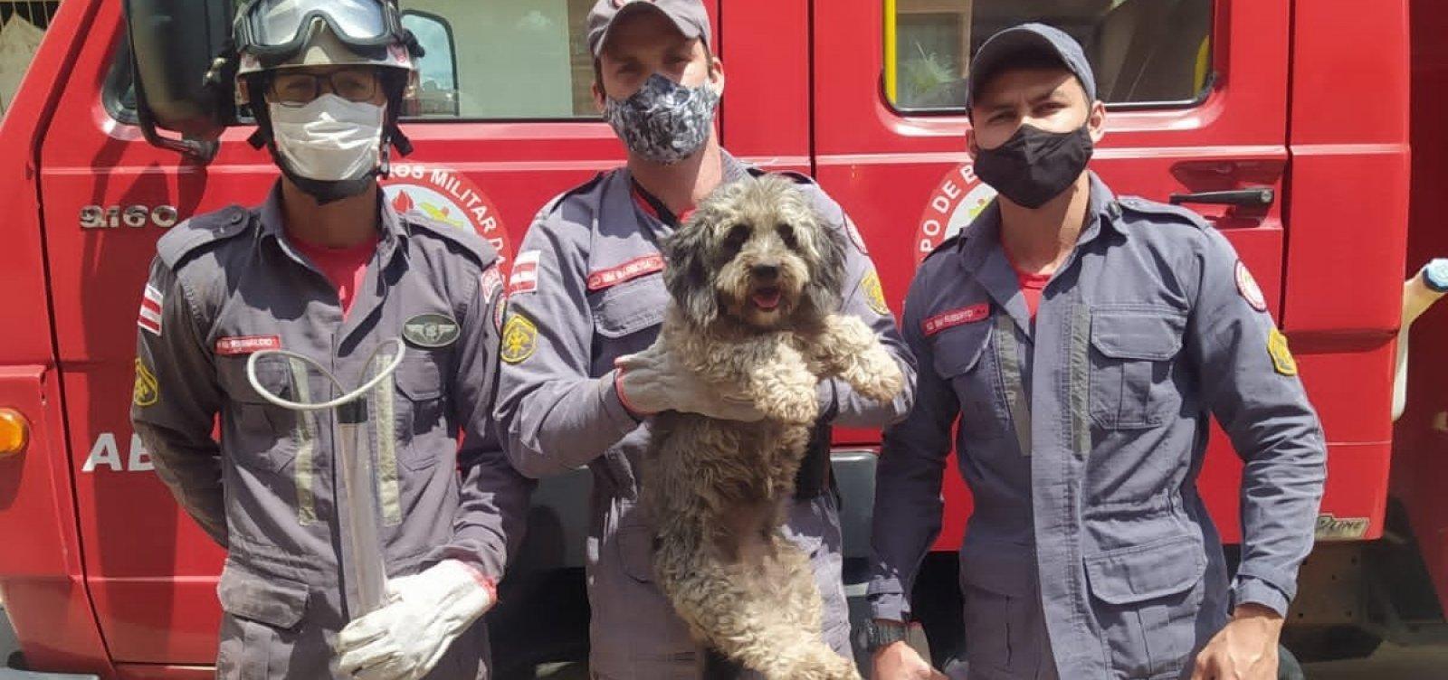 Após correr atrás de gato, cachorro fica preso entre paredes e é resgatado por bombeiros