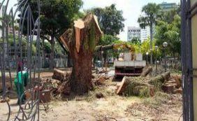 Árvore centenária é derrubada pela prefeitura em praça do Campo Grande