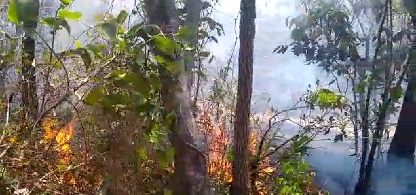 Bombeiros combatem incêndios em ao menos cinco áreas de vegetação na Bahia