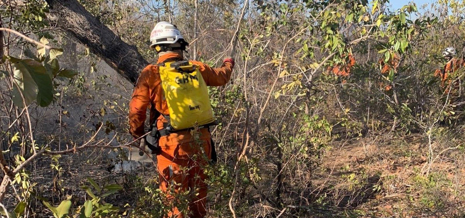 Bombeiros combatem ao menos 7 focos de incêndio florestal na Bahia