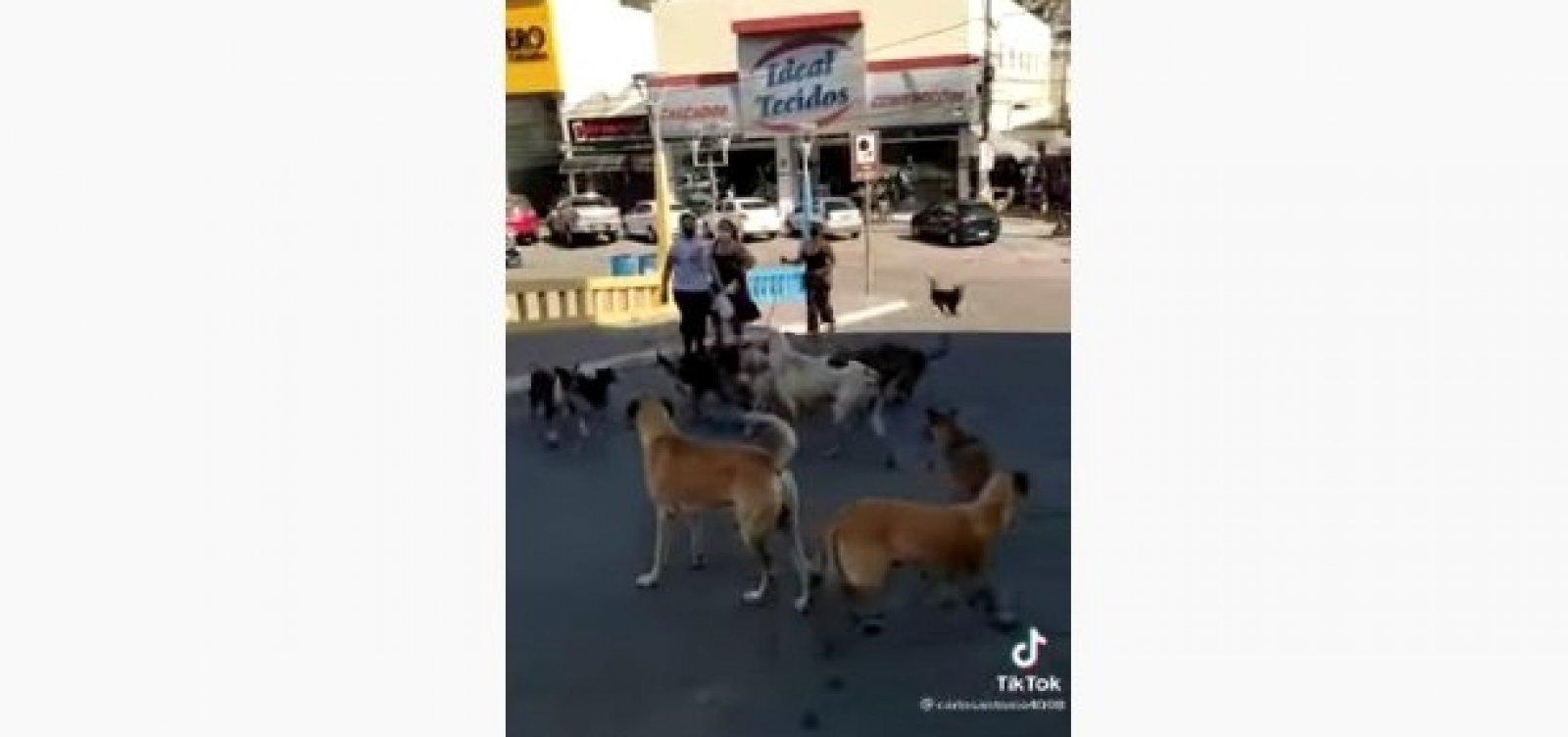'Gangue de cachorros' invade Jacobina e assusta moradores