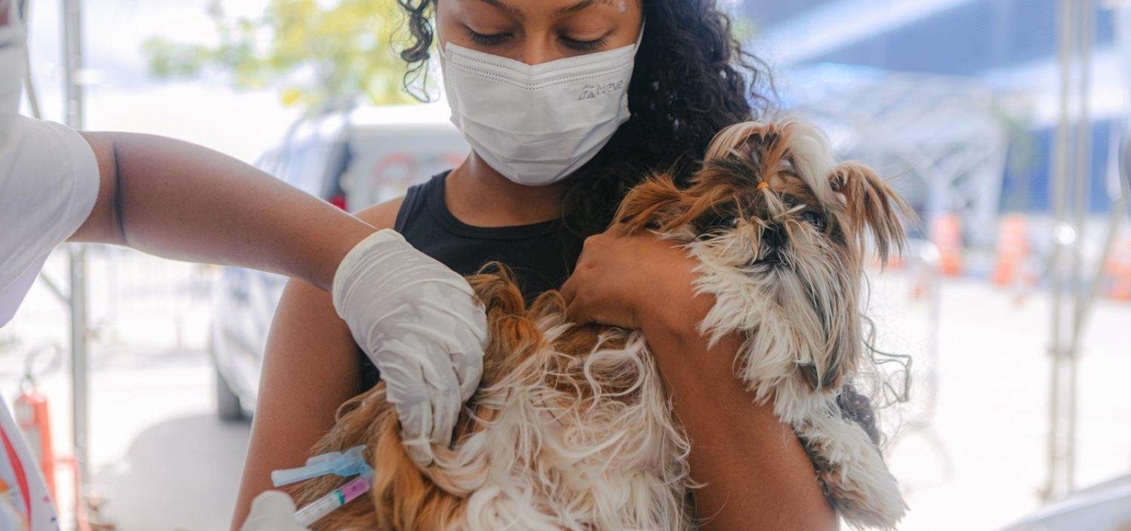 Campanha de vacinação antirrábica em Salvador é prorrogada até quinta-feira