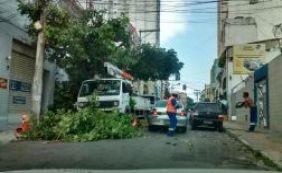 Troca de poste e poda de árvore complicam o trânsito nesta manhã; confira