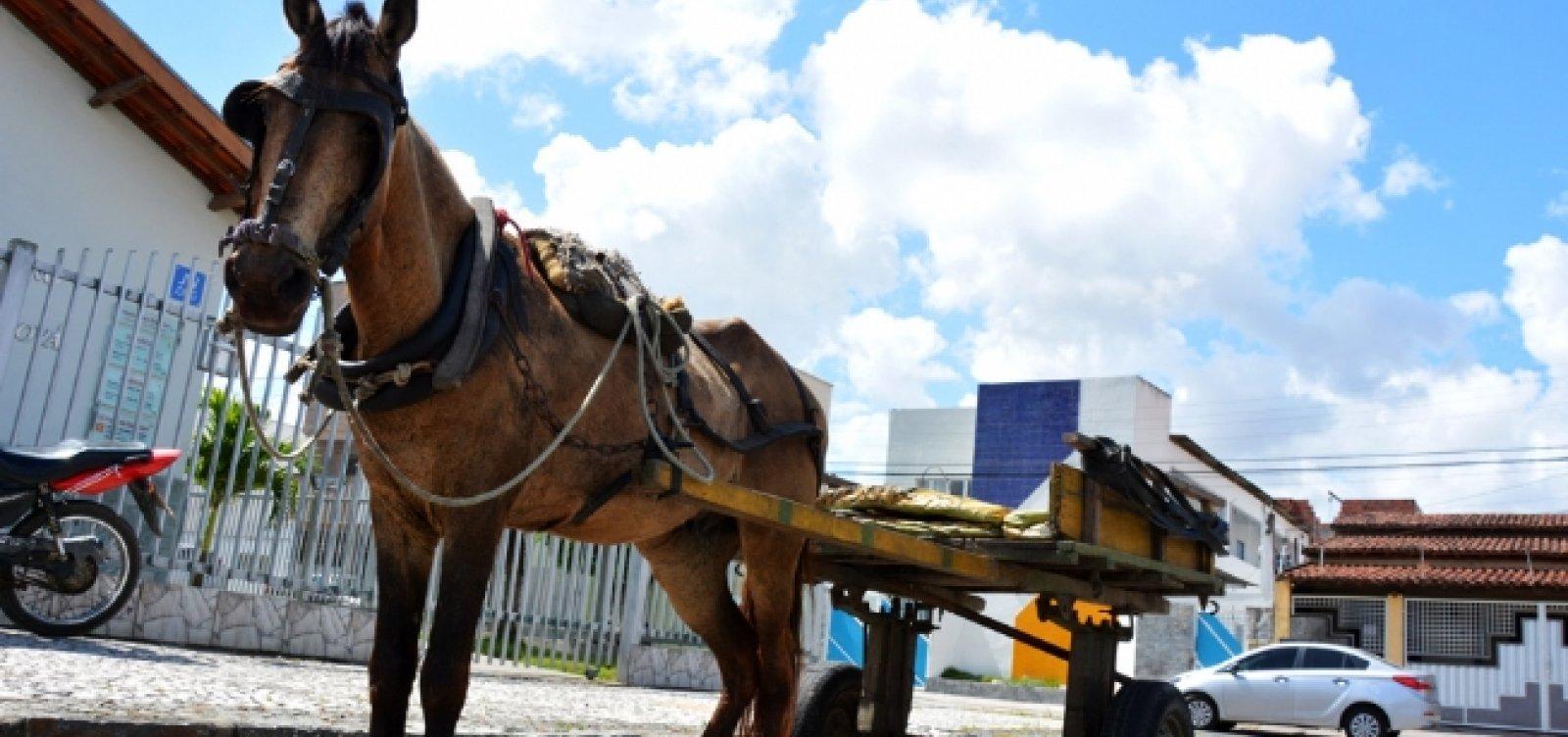 Após convênio, carroceiros de Feira de Santana poderão trocar animal por moto adaptada