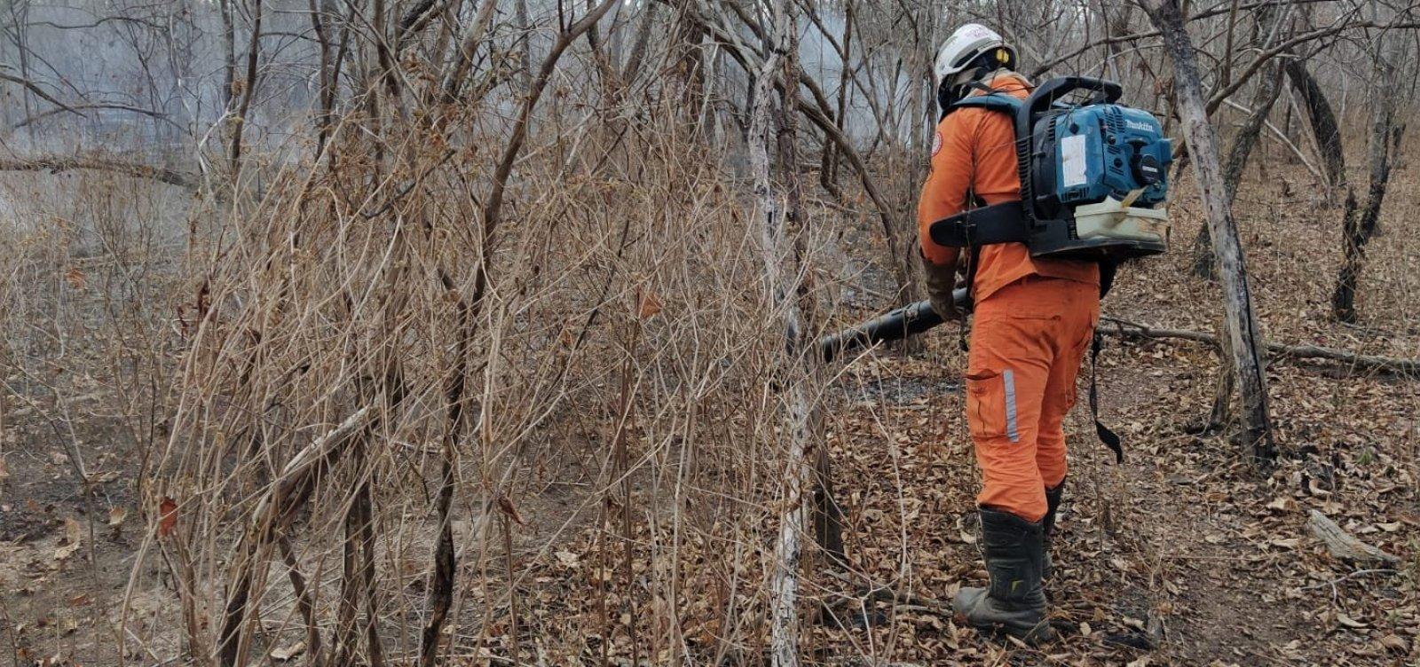 Bombeiros combatem incêndios florestais em seis municípios baianos nesta quinta-feira