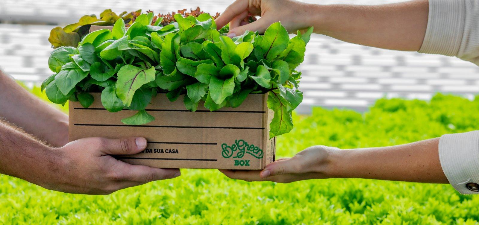 Com alimentos sem agrotóxico, Salvador ganha este mês primeira fazenda urbana