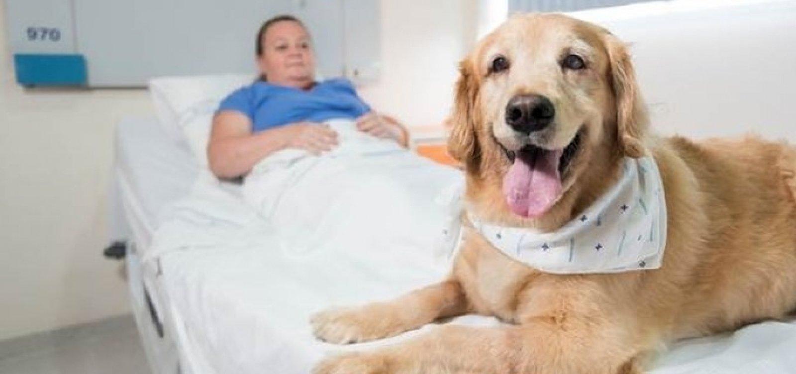 Projeto que permite visita de animais a pacientes internados avança na Bahia