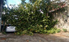 Árvore cai em cima de dois carros estacionados no Rio Vermelho