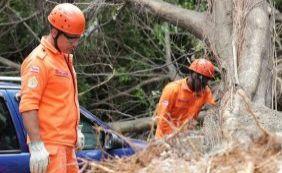 Após queda de árvore, corpo de idosa é removido na Tancredo Neves