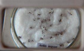 Itália, Espanha, Inglaterra e Portugal confirmam casos de zica