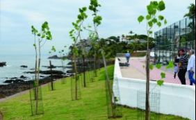 Após obras de requalificação, Rio Vermelho ganha 150 novas mudas de árvores