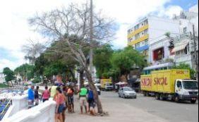 Para evitar riscos, árvore morta será removida de circuito do Carnaval