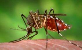 Casos de Zika são confirmados por autoridades do Canadá e Peru