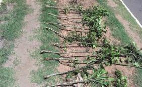 Cerca 40% das áreas verdes recuperadas foram danificadas por vândalos