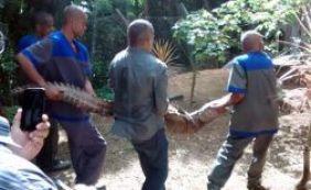 Jacaré de dois metros é capturado em faculdade de Pituaçu