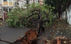 Com chuvas, árvore cai sobre pista no bairro da Graça, em Salvador