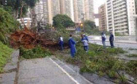 Árvores caídas complicam o trânsito na Pituba e na Av. Garibadi