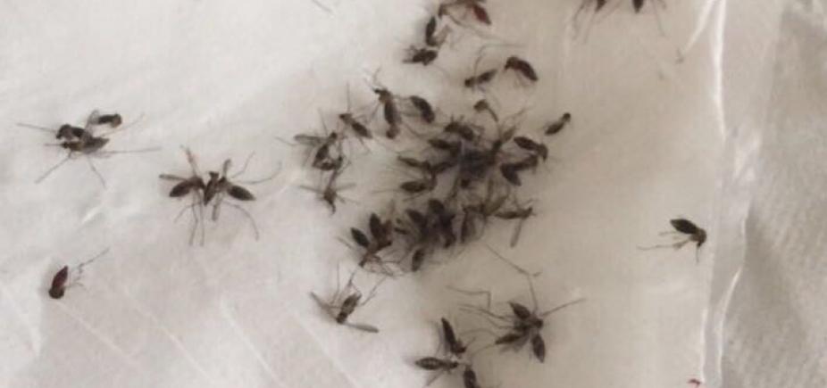 Após infestação de mosquitos, Prefeitura de Alagoinhas diz que age apenas contra Aedes Aegypti