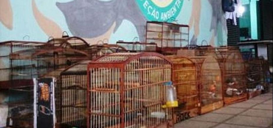 Aves silvestres são apreendidas em operação policial na região da Sete Portas