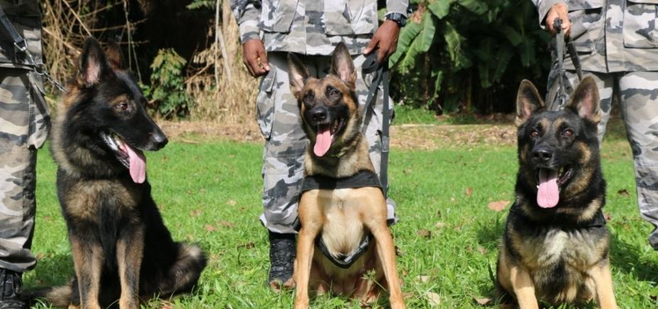 Batalhão de Choque da PM conta com 3 cães treinados para identificar drogas e explosivos; companhia tem outros 36 animais