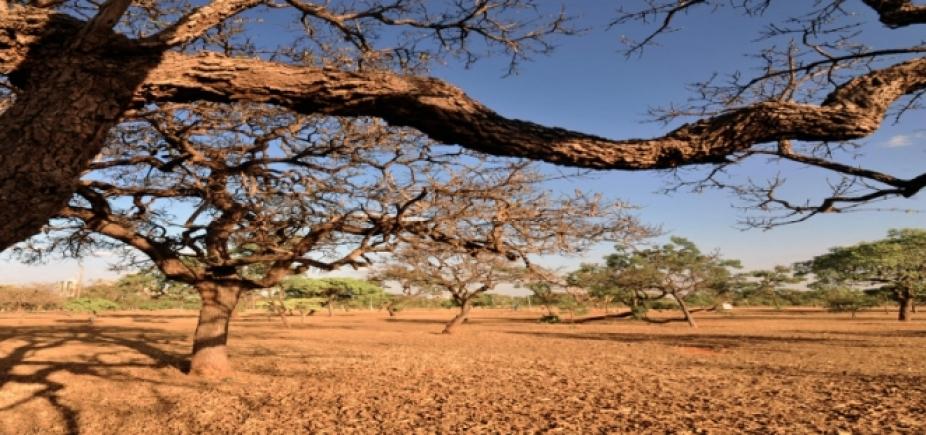 Por causa da seca, Bahia tem mais de 170 municípios em estado de emergência