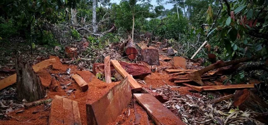 Operação da PRF e Inema apreende madeiras extraídas ilegalmente