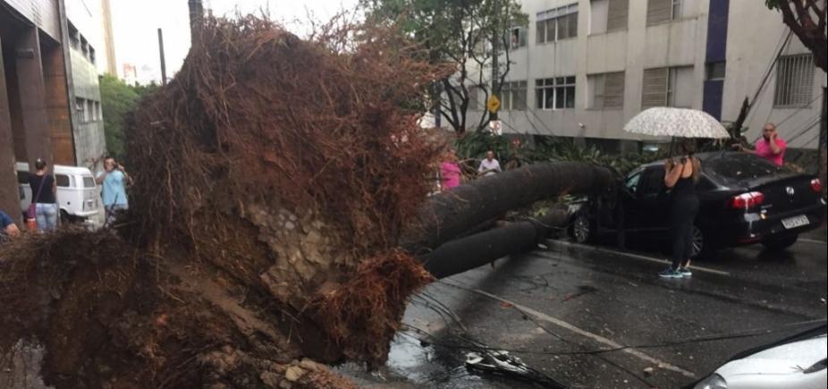 Taxista morre após ter carro atingido por árvore em Belo Horizonte