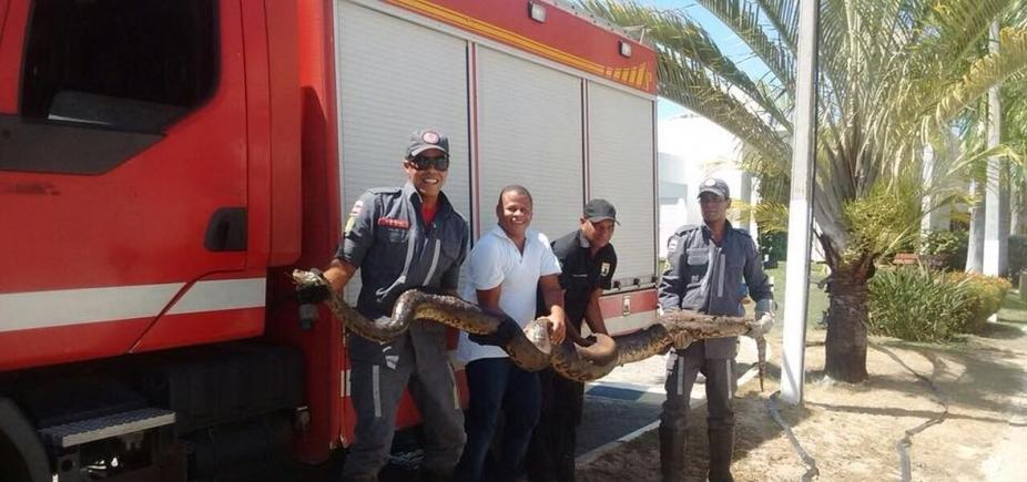 Arembepe: sucuri de 4 metros é resgatada após incêndio em vegetação