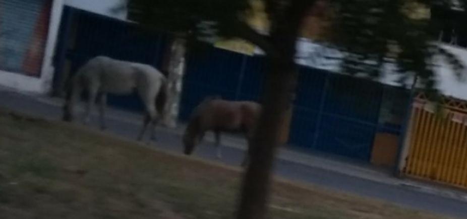 Fazendinha: cavalos aproveitam a liberdade no bairro de Itapuã