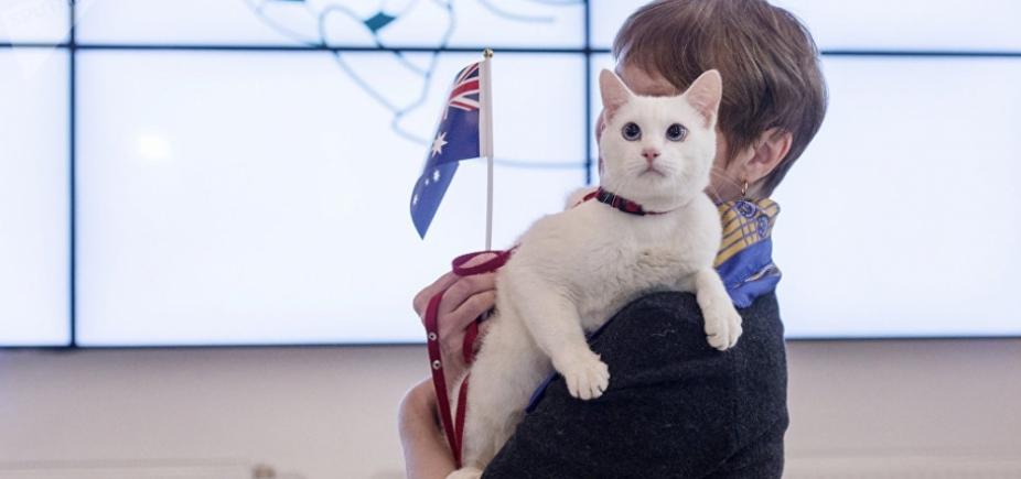 Gato do museu Hermitage é novo oráculo da Copa