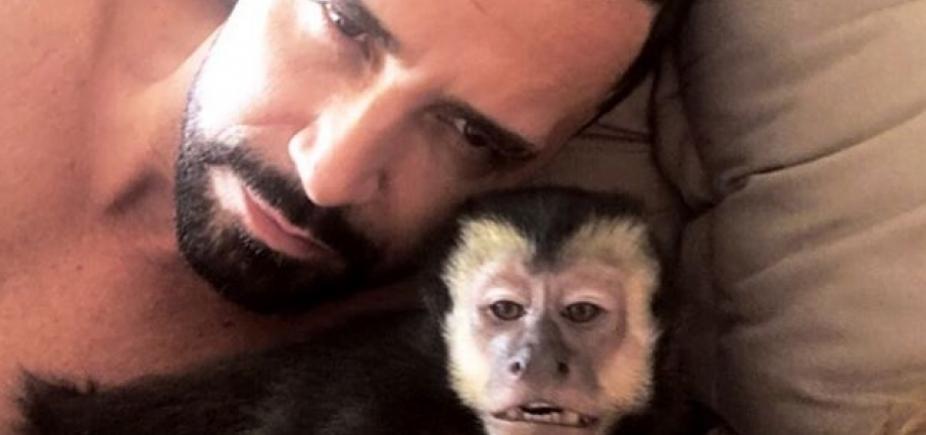 Macaco de latino morre após ser atropelado no Rio de Janeiro