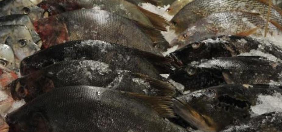 Peixes vão ser vendidos com até 40% de desconto na Ribeira